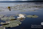 Sealey Lake